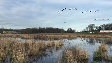West Eugene Wetlands