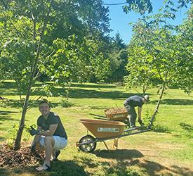 Volunteers mulching